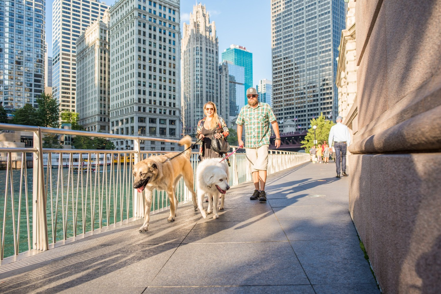 Where Can I Bring My Dog in Chicago, IL?