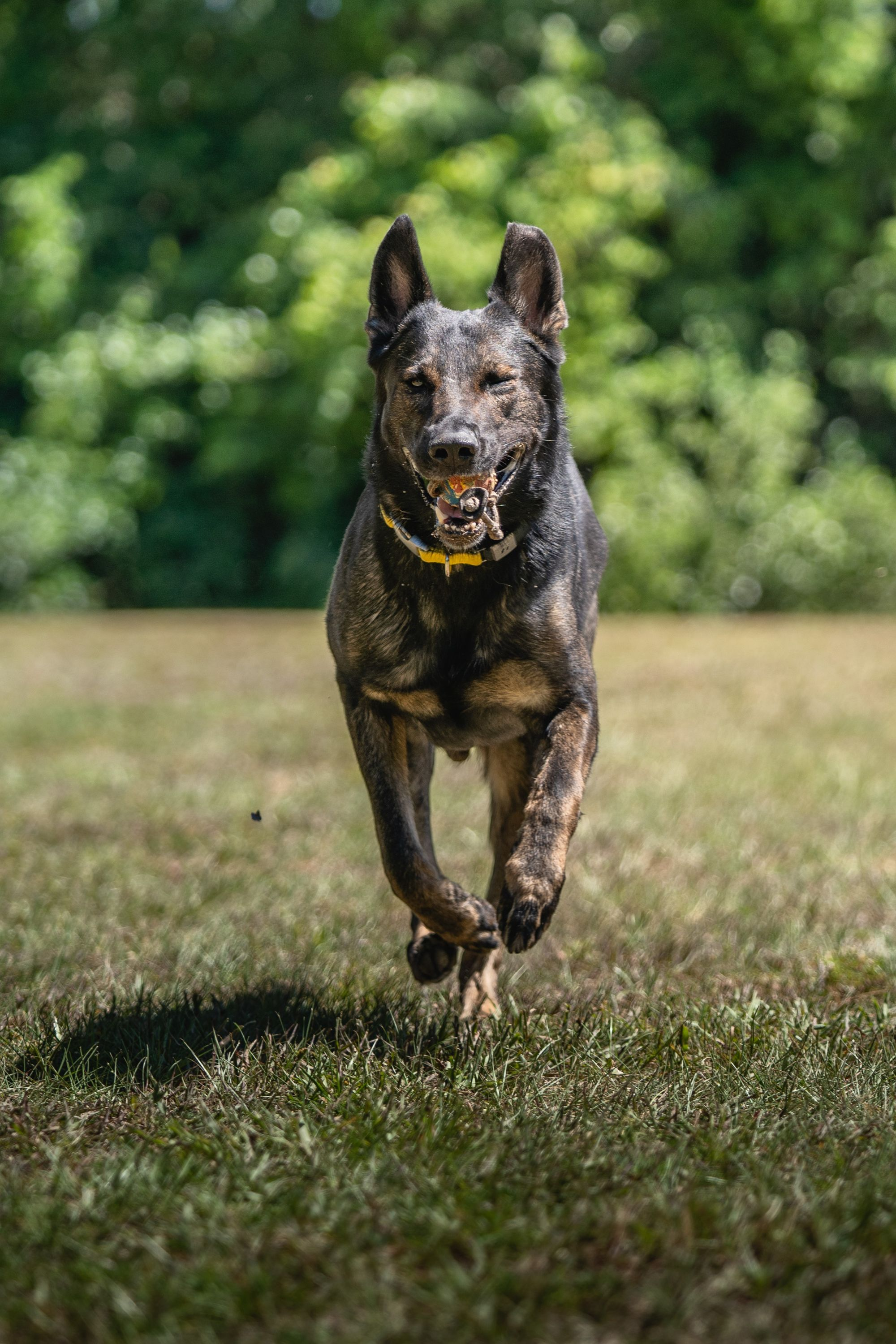 Dog Training With Or: Teach Your Dog To Walk Off Leash