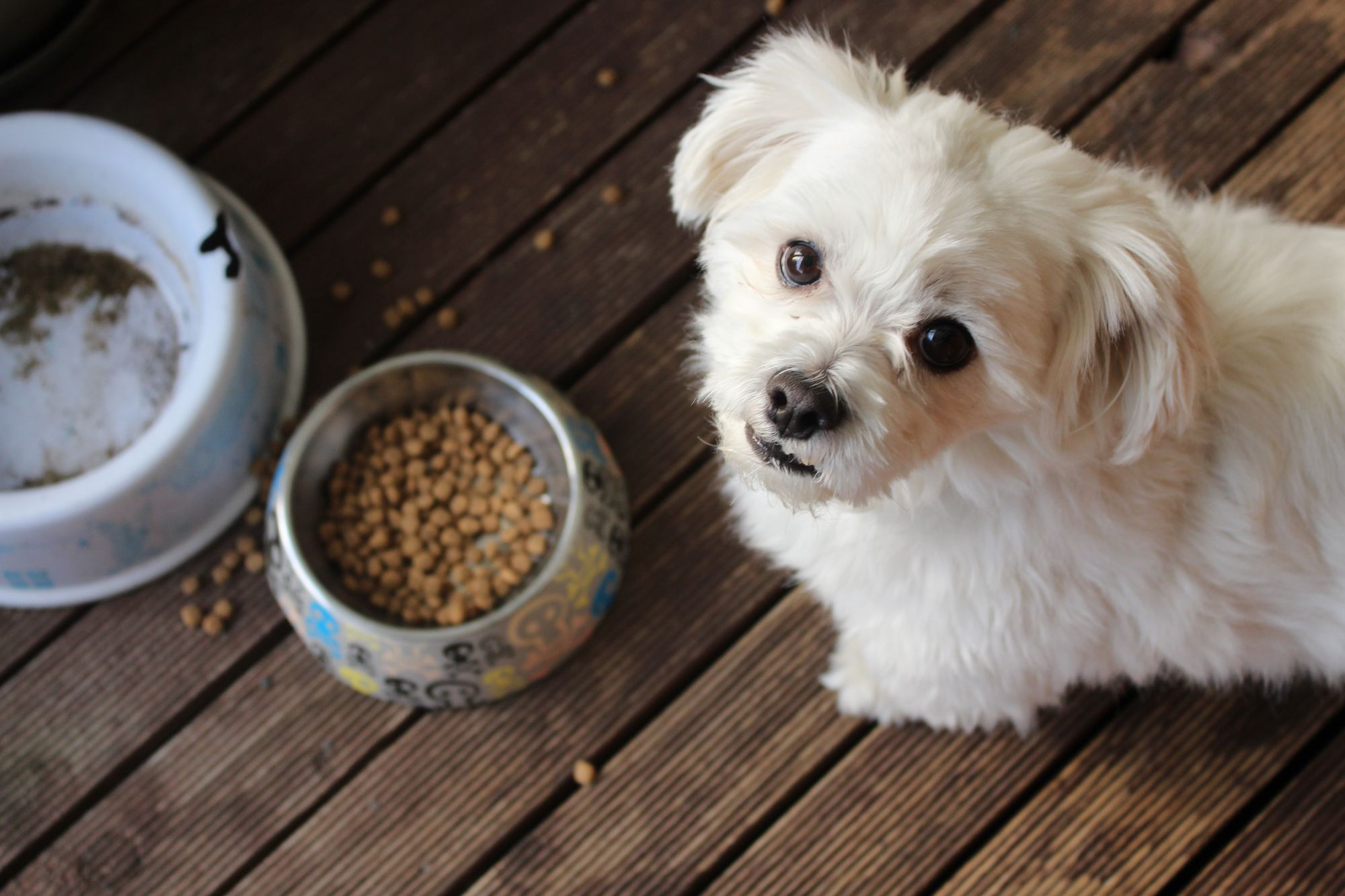 How Long is Dog Food Good for?