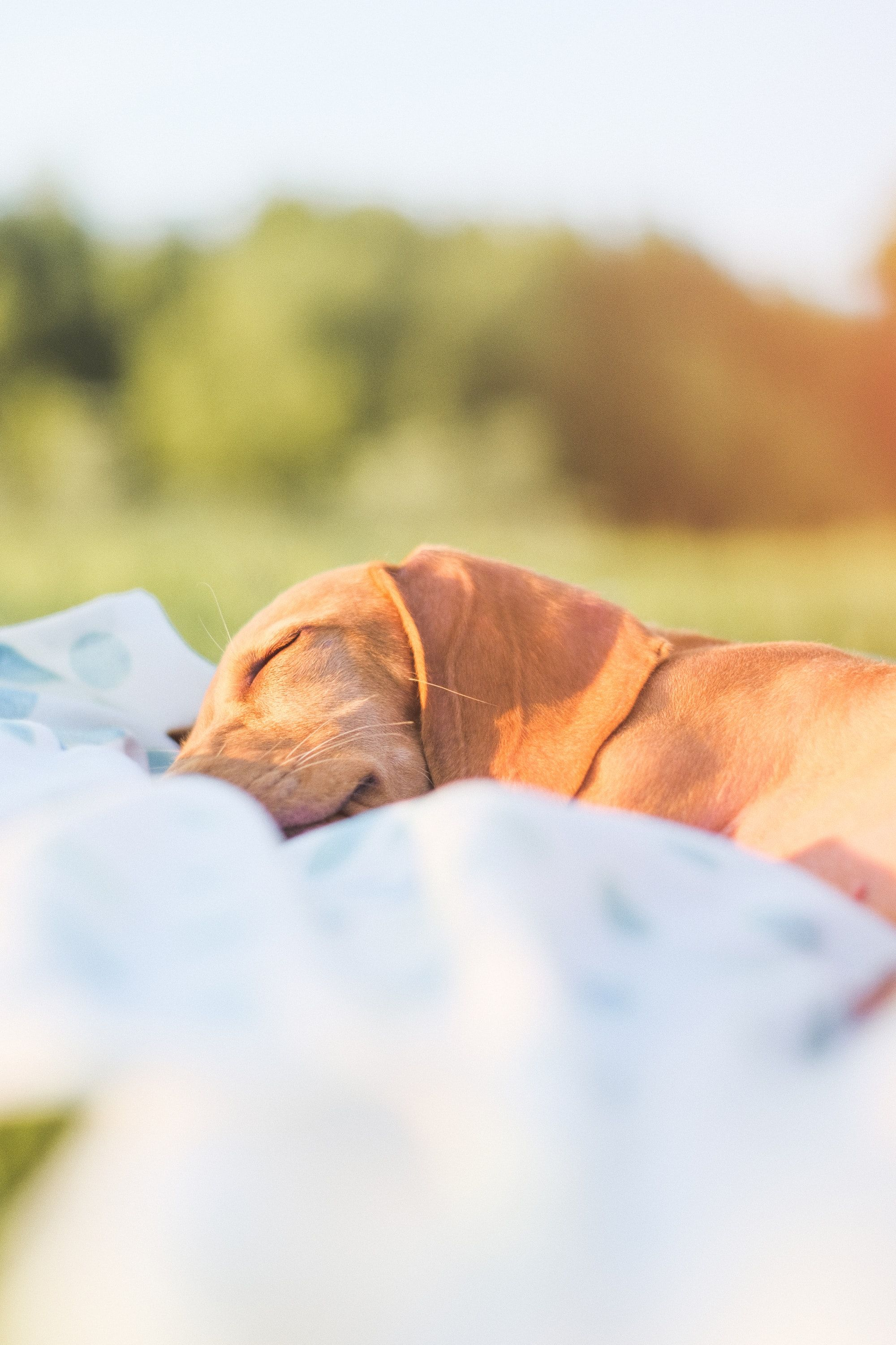 First-Of-Its-Kind Sleep Tracking For Dogs From Fi!