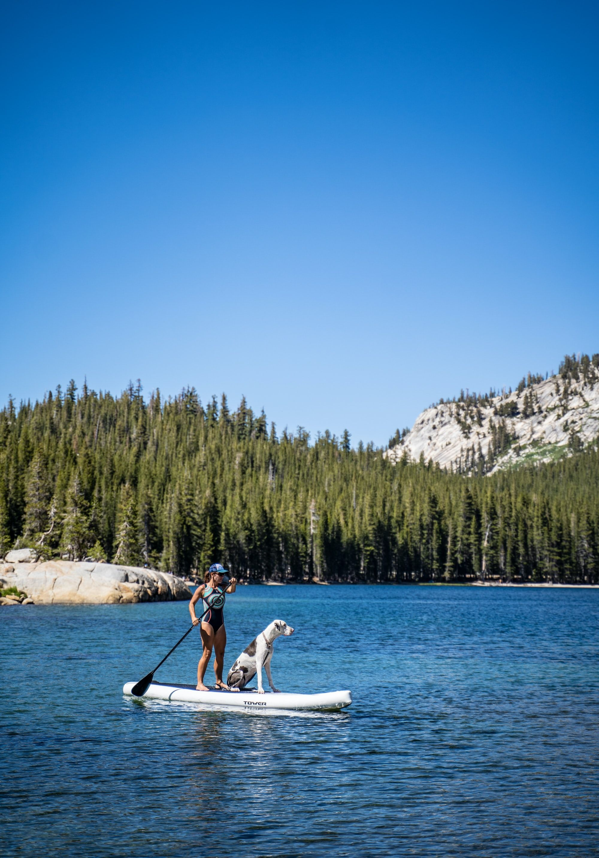 How to SUP with Your Pup! Tips on Paddle Boarding with Your Dog