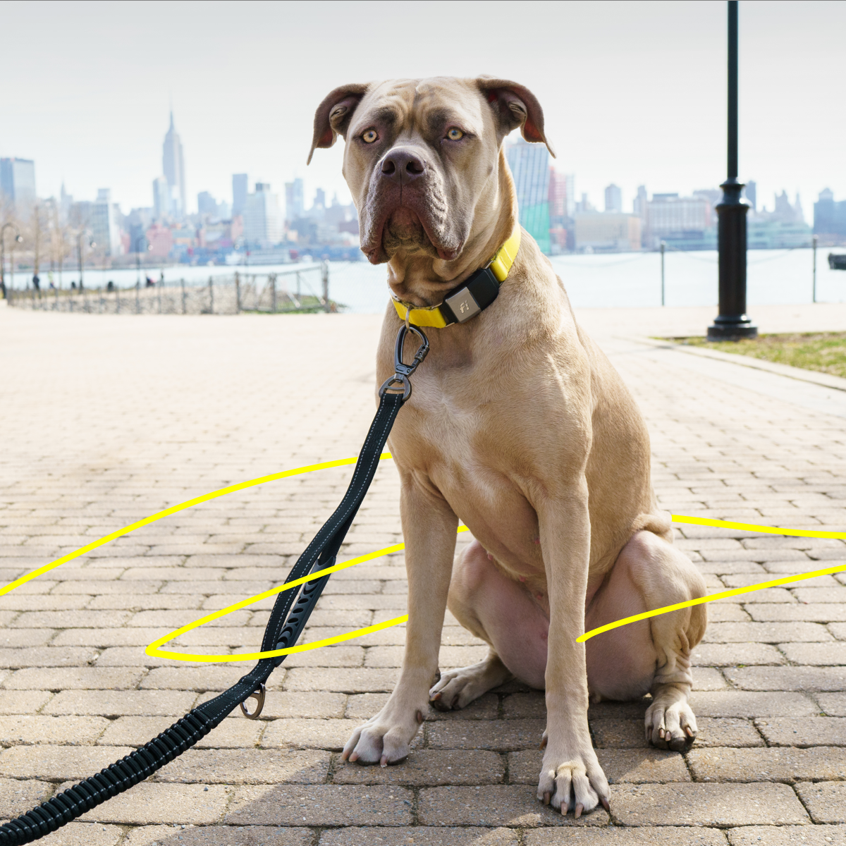 Dog-Friendly City Guides