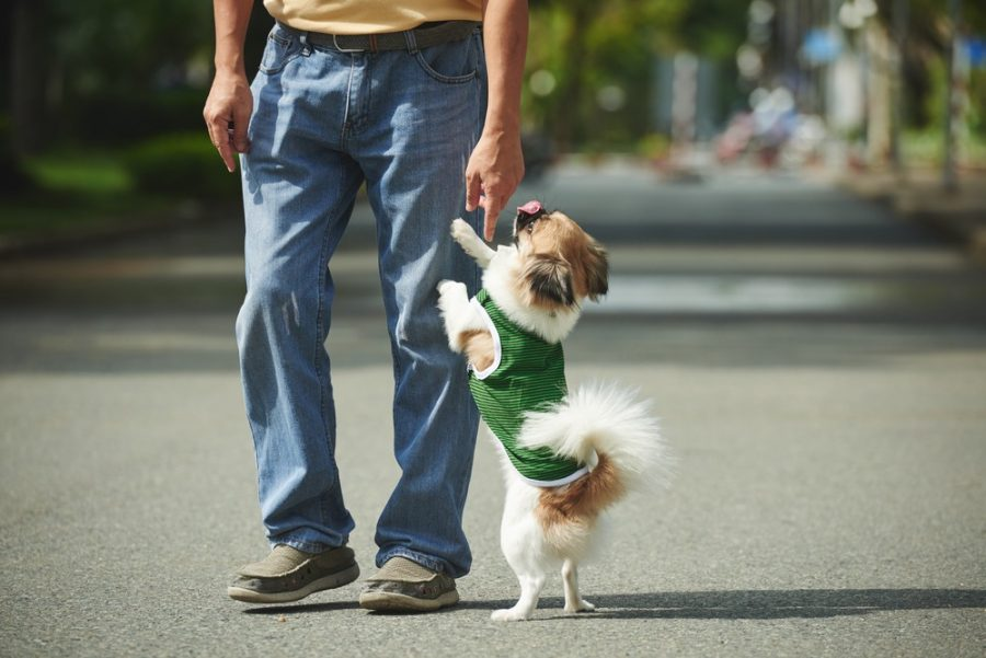 Dog Training With Or: How To Teach Your Dog To Politely Greet Visitors