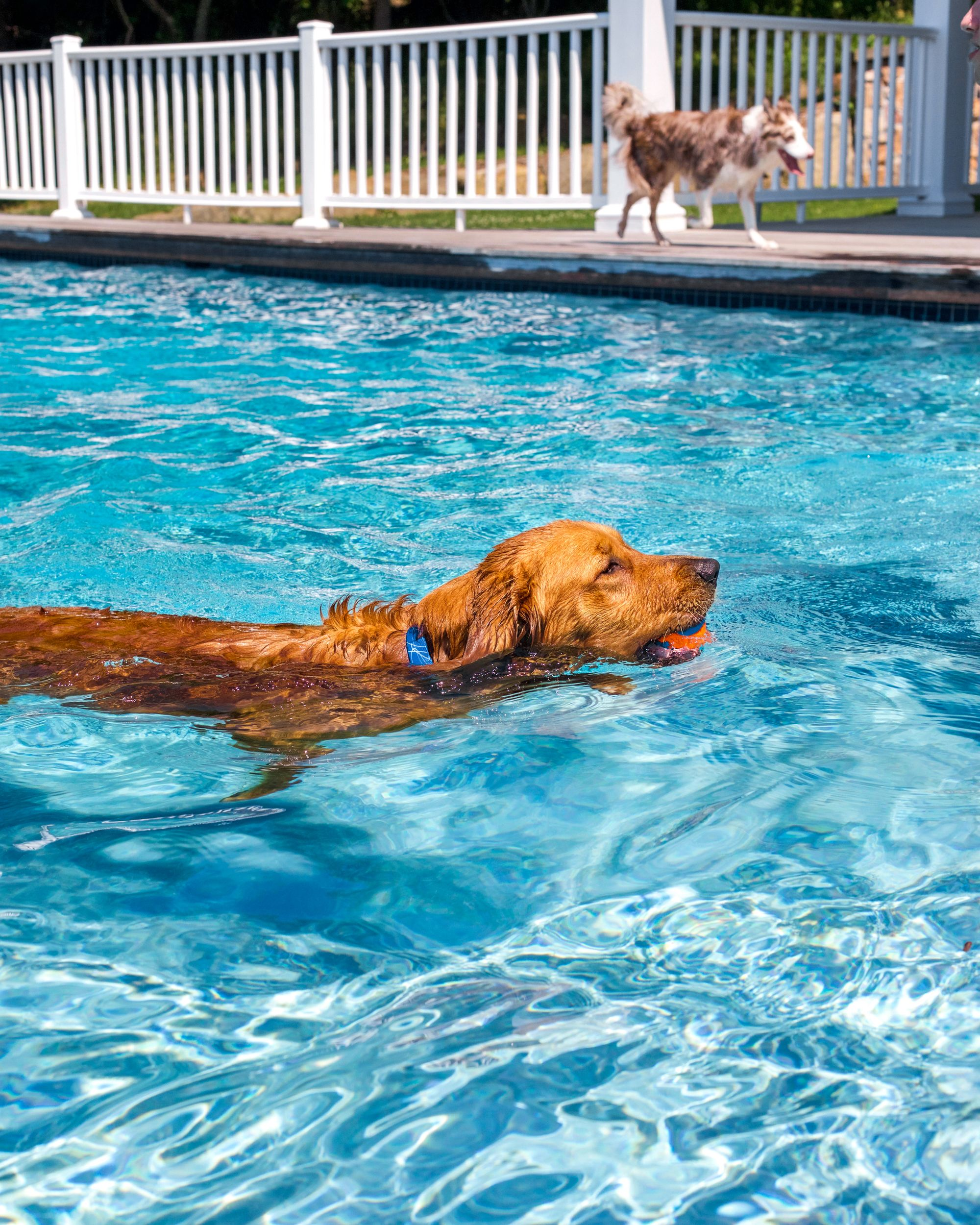 Dog Training With Or: Teach Your Dog To Swim