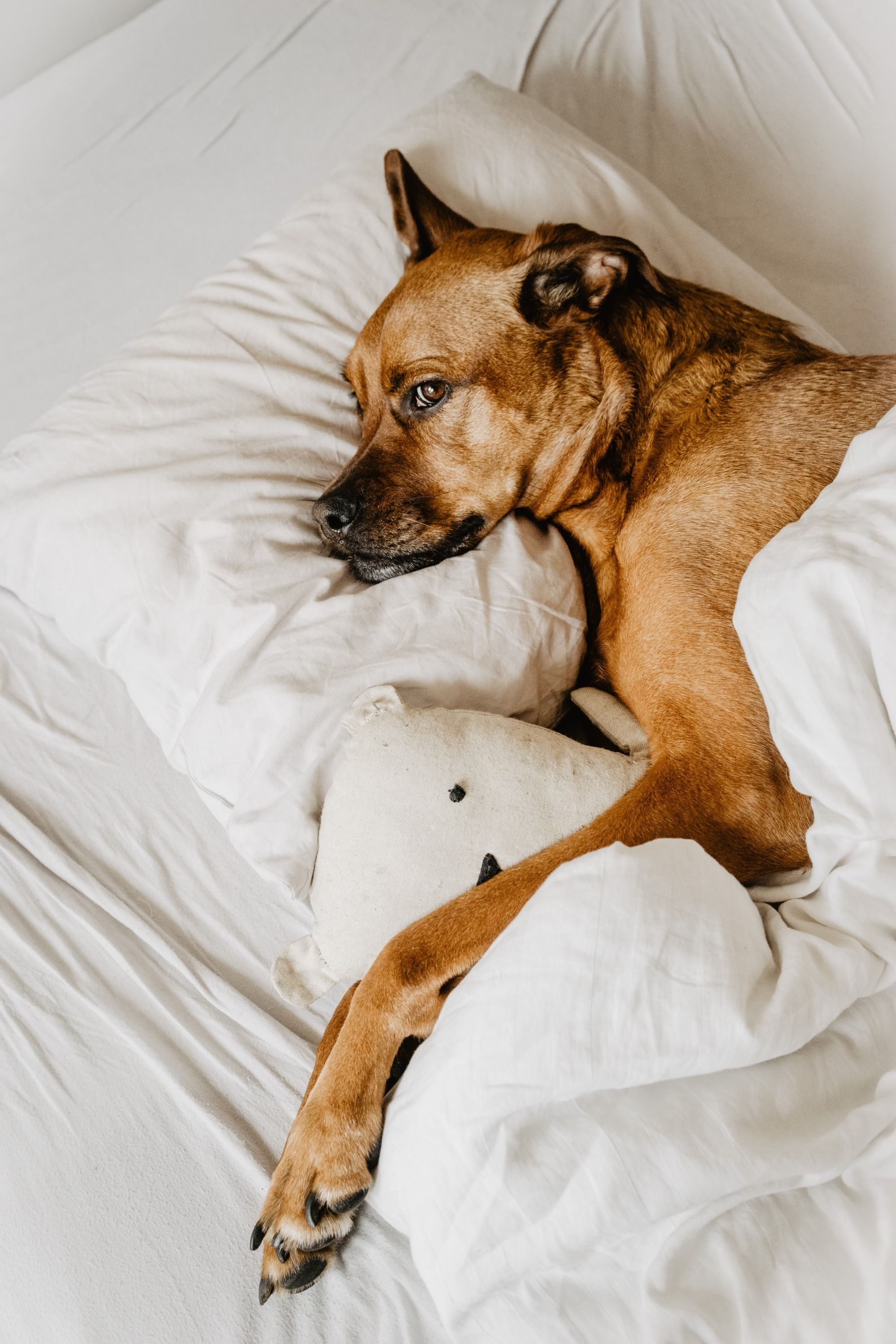 Can Dogs Have Nightmares?