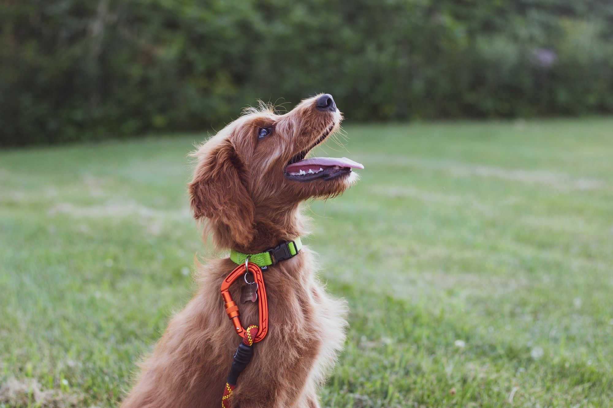 10 Mistakes Owners Make When Training Their Dog