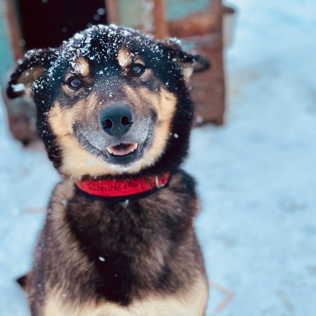 New Maker Alert: Elite Dog Gear