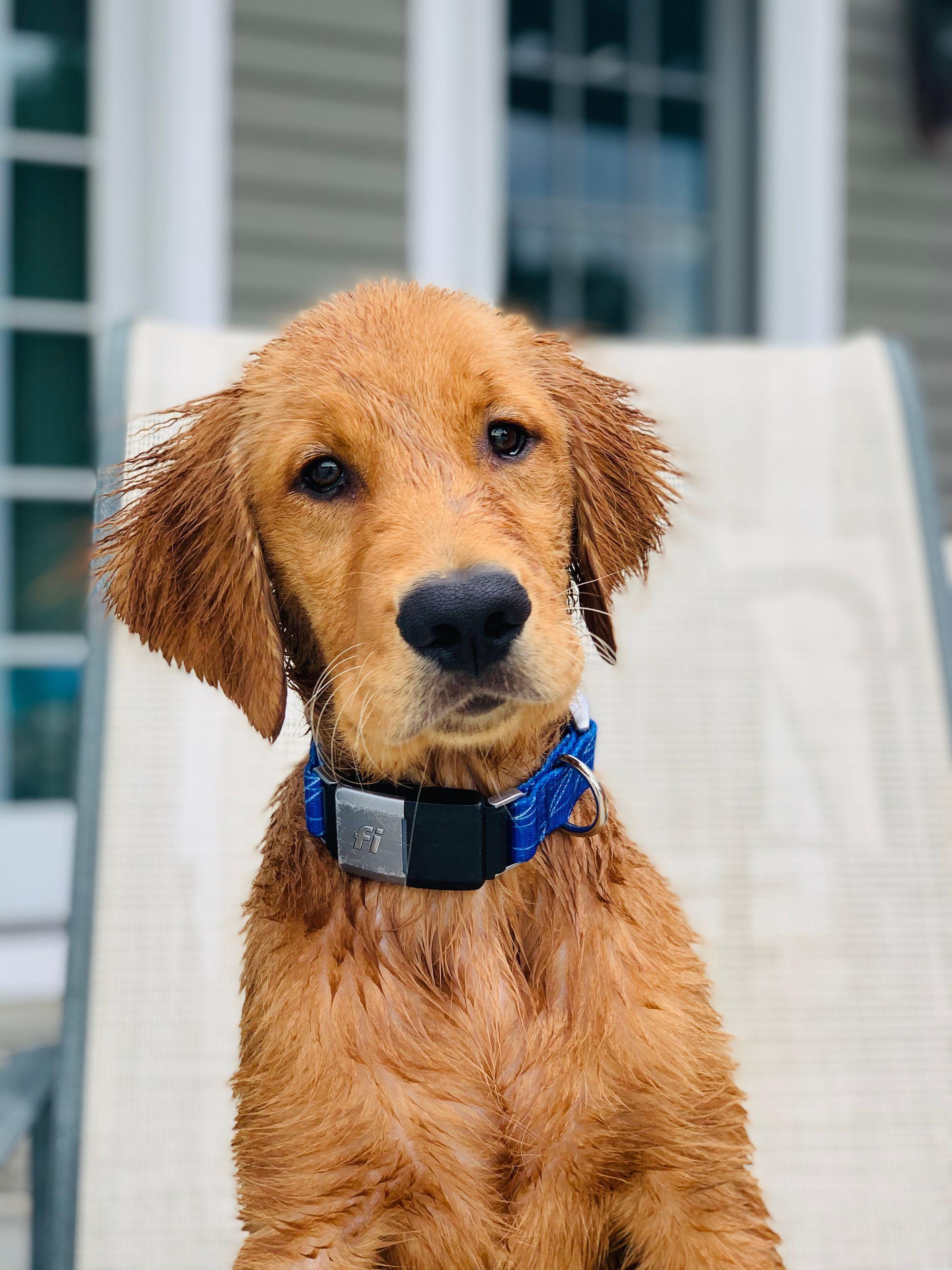 When Will My Puppy Calm Down?