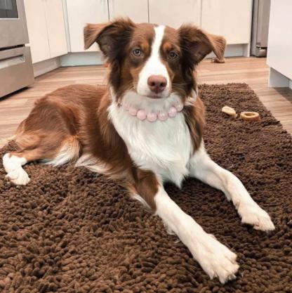 Pink Dog Collar - Dog Gear You Need