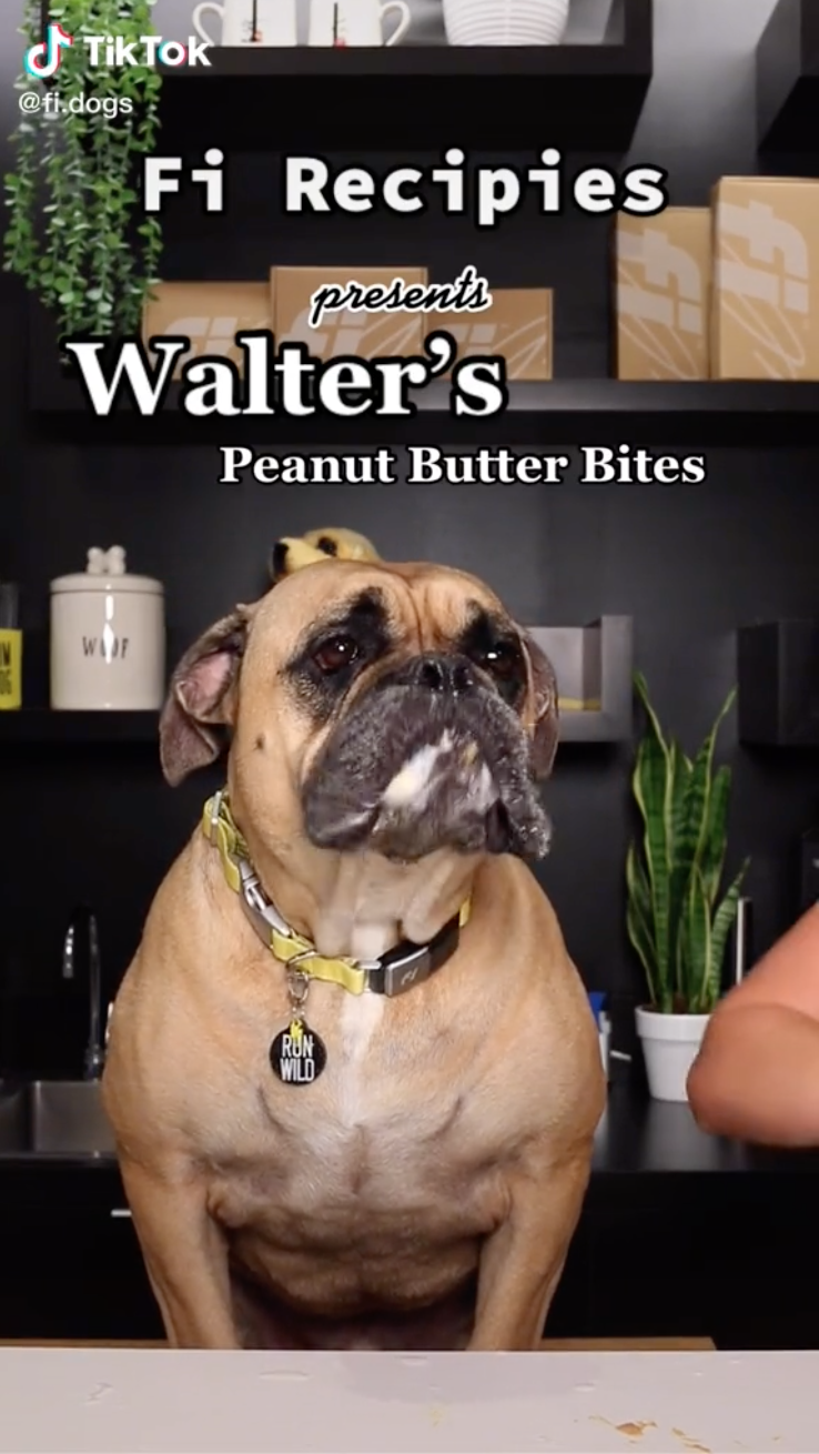 Cooking With Fi: Walter's PB Bites