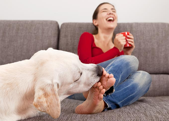 dog licking feet