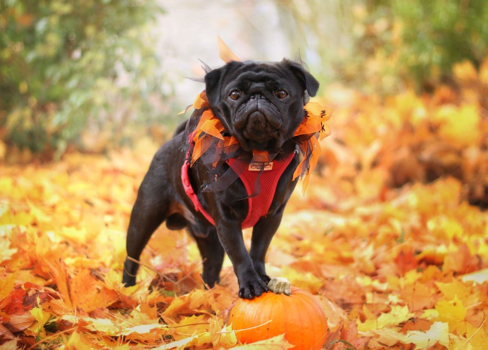 15 Fun Fall Activities to Do with Your Dog this Year