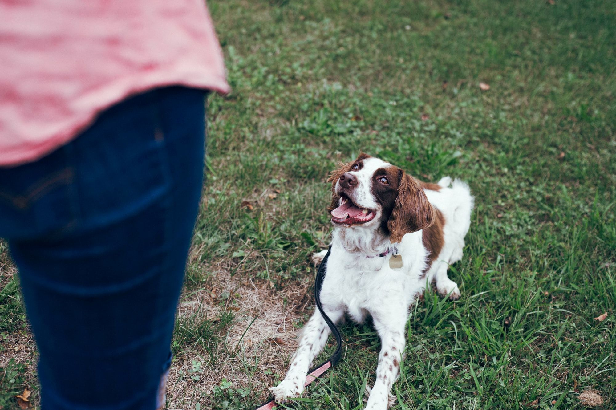 Dog Training with Or: 6 Commands That Every Dog Should Know