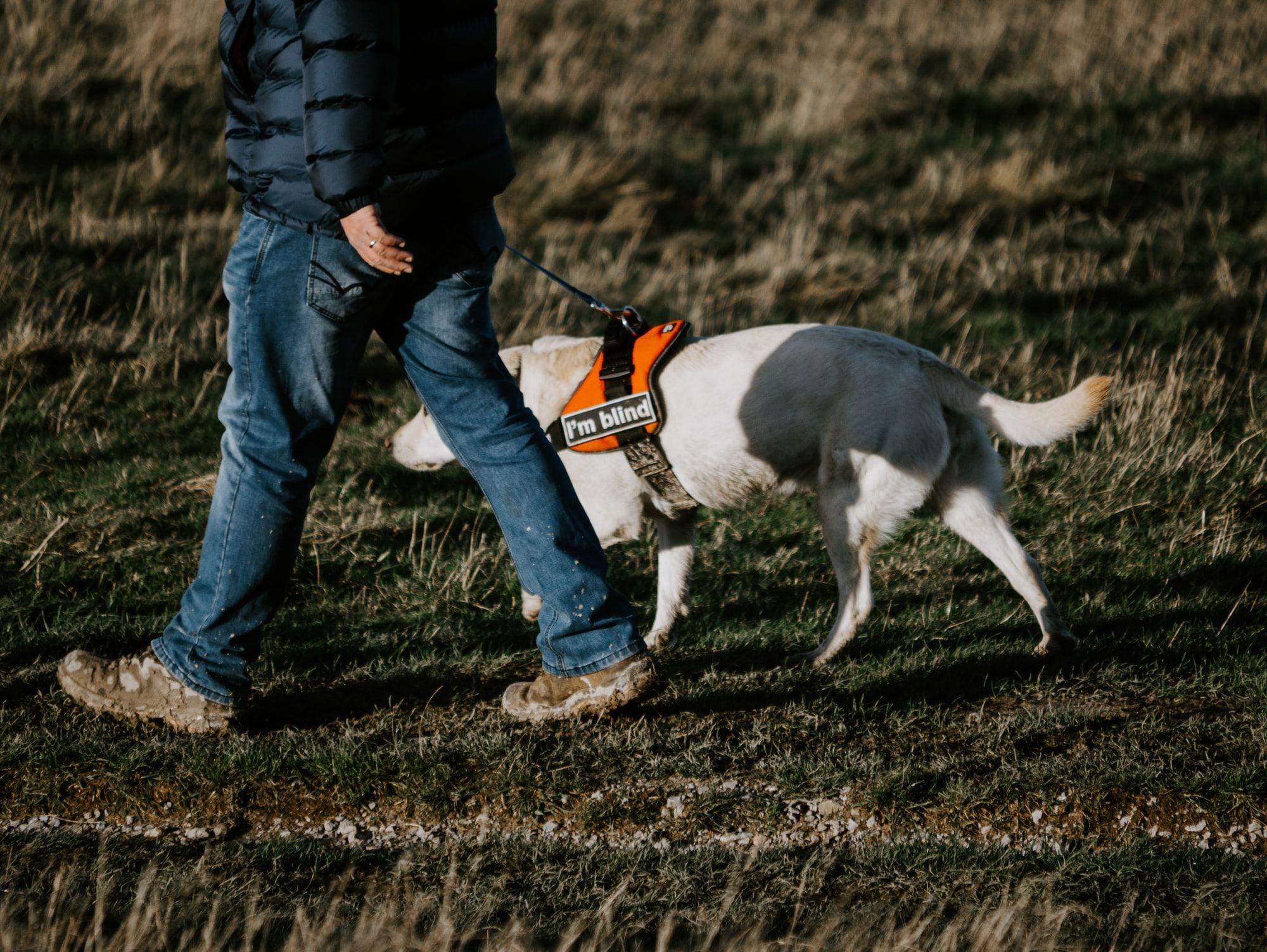 Adopting A Blind Dog