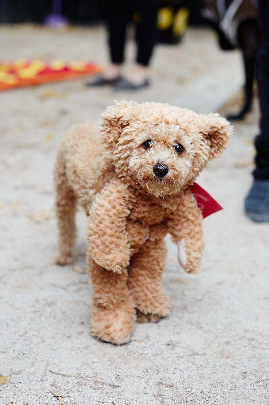 Bear Dog Costume