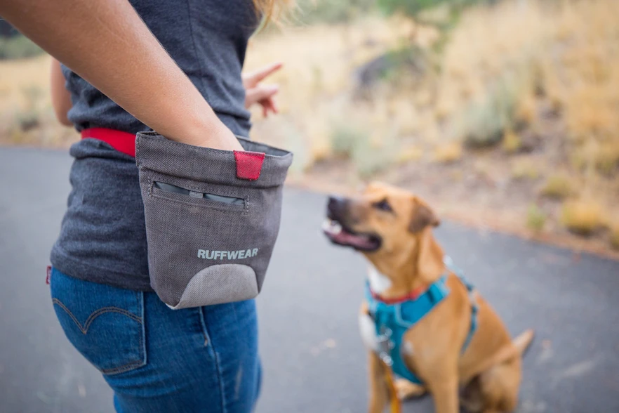 3 Training Tools All Dog Owners Need