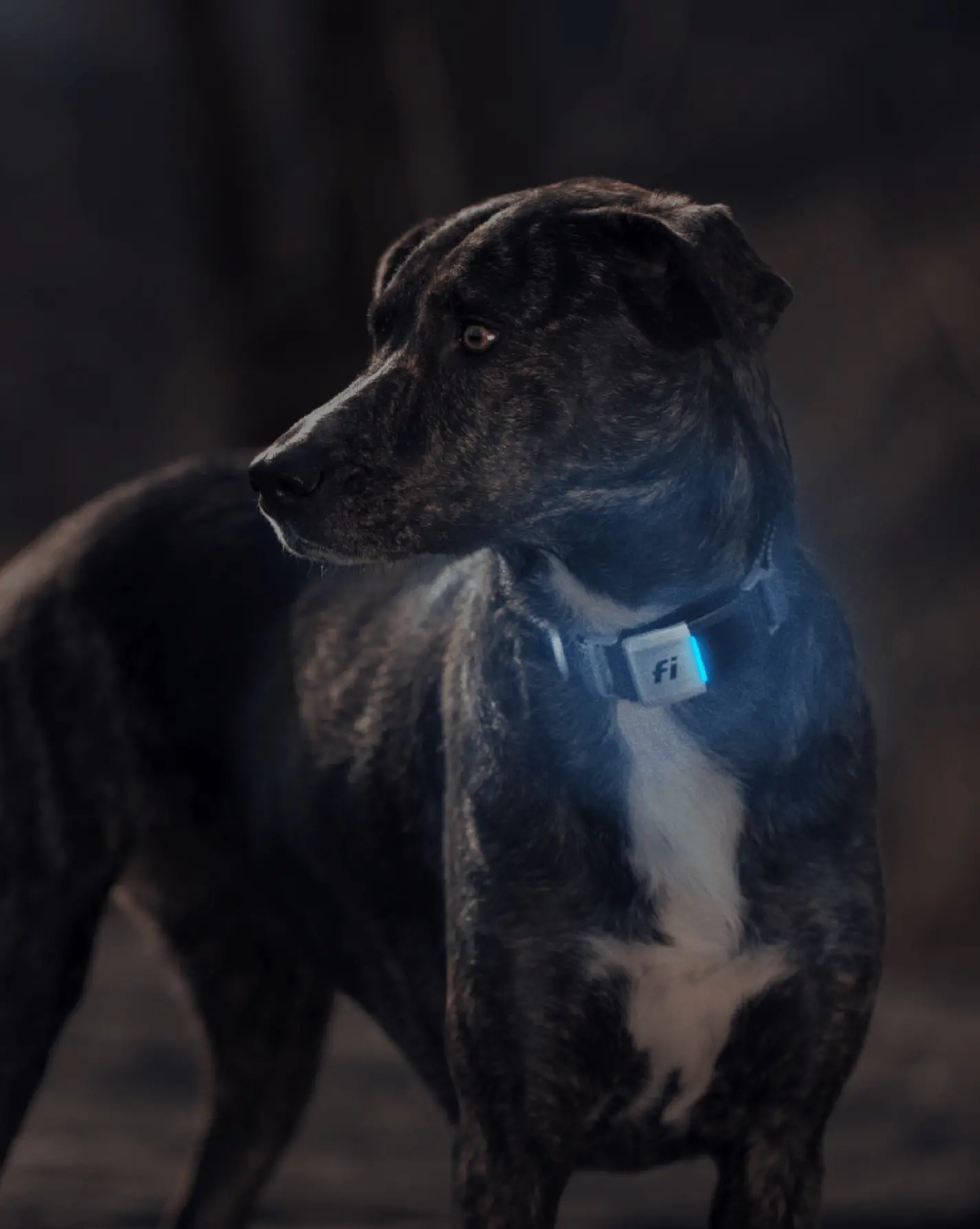 How Well Can Dogs See In The Dark?