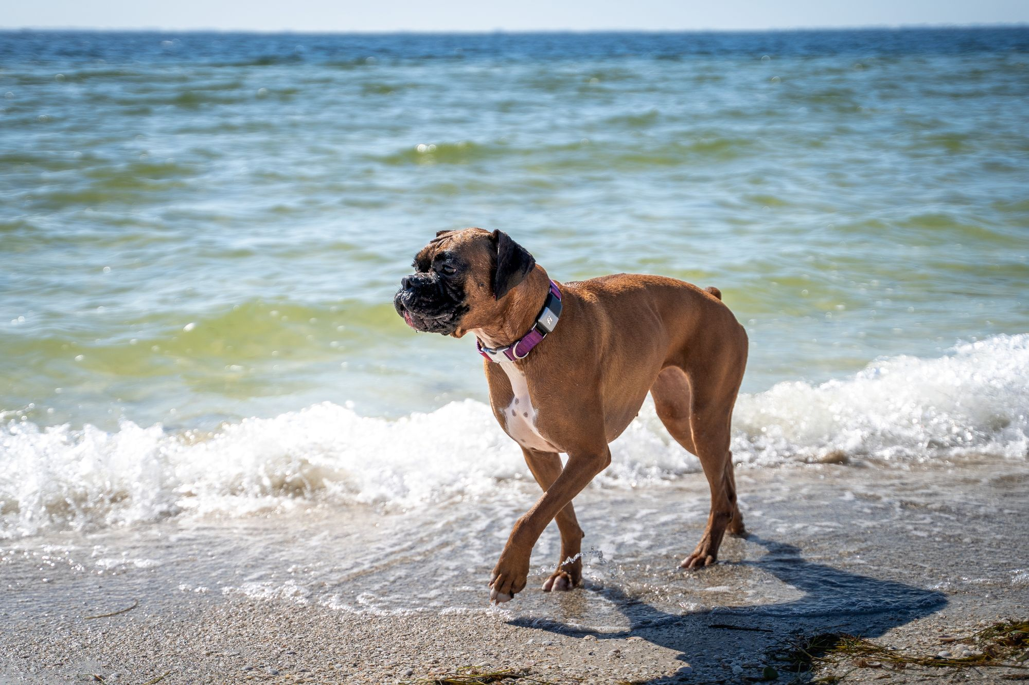 Leptospirosis In California: A New Threat Of An Old Disease