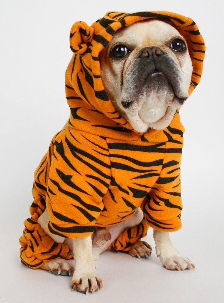 Dog Tiger Costume