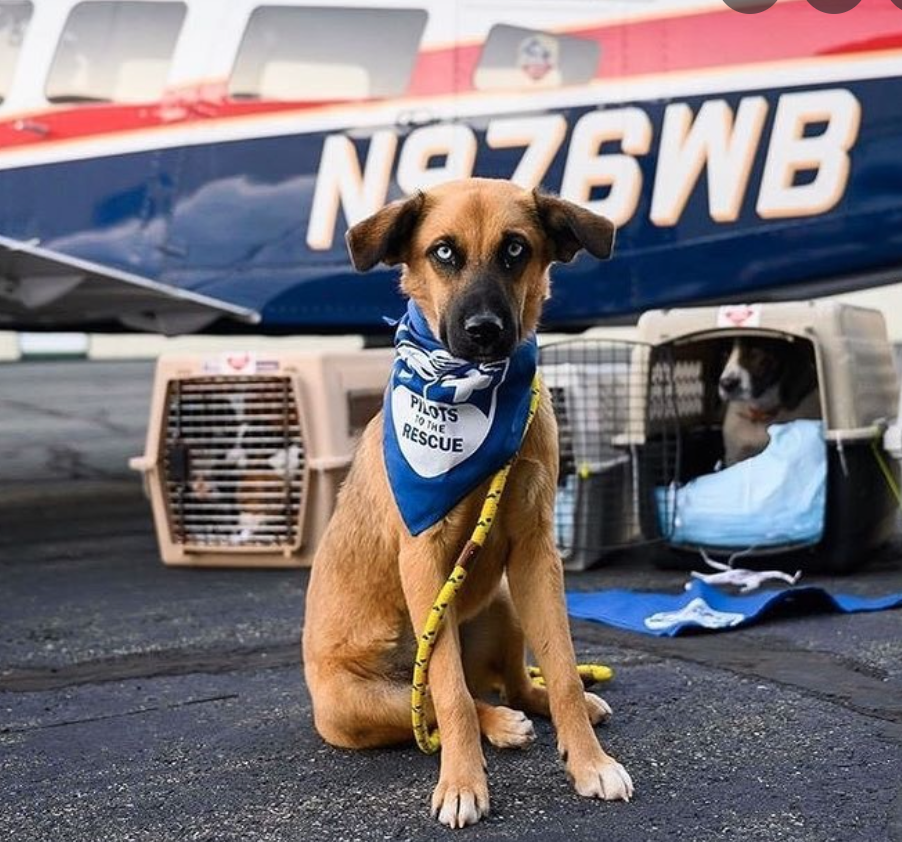 Fi Rescues: Pilots To The Rescue