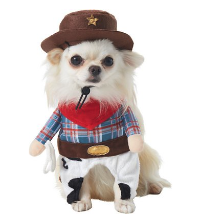 small white dog in cowboy halloween costume