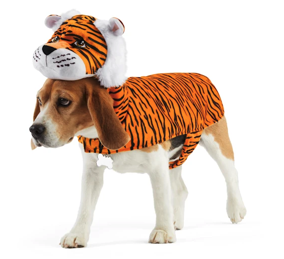 beagle in a tiger halloween costume