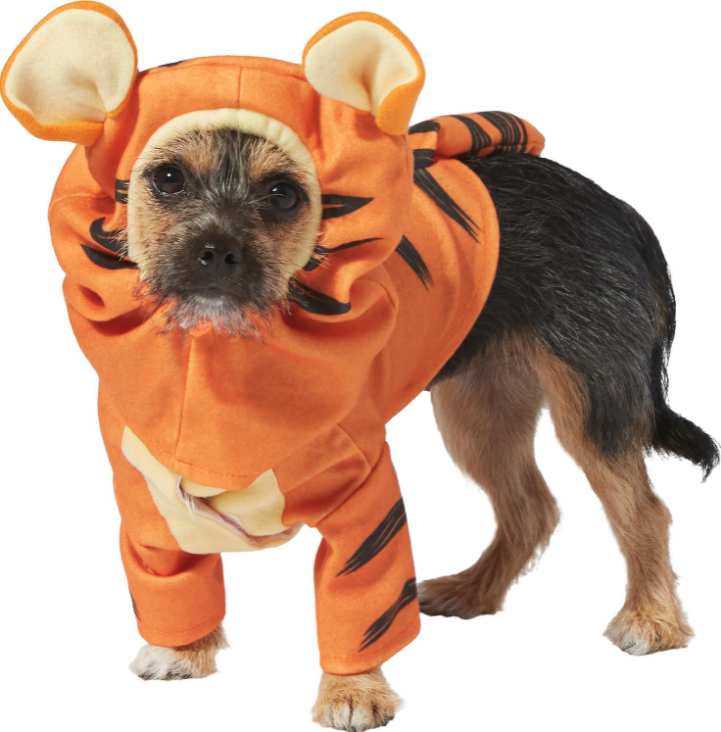 small brown and black dog wearing a tiger halloween costume