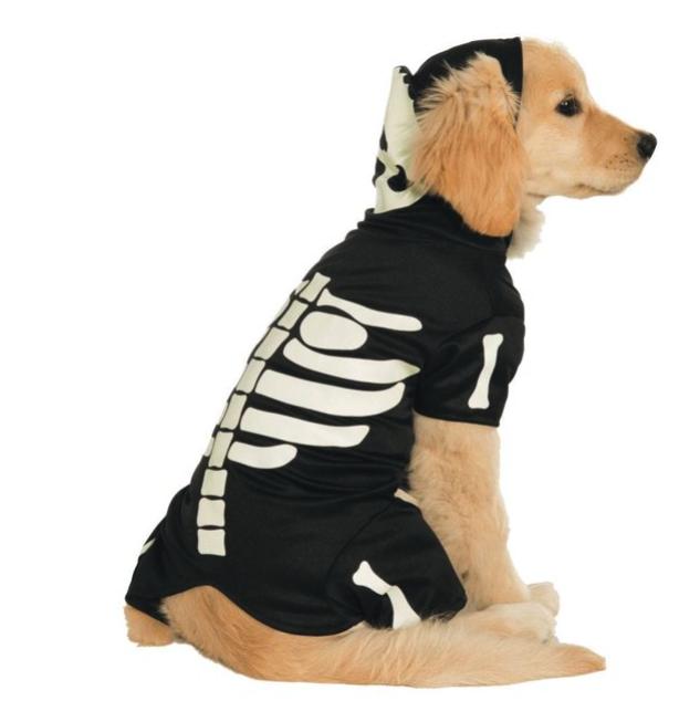 golden retriever puppy wearing a skeleton dog hoodie