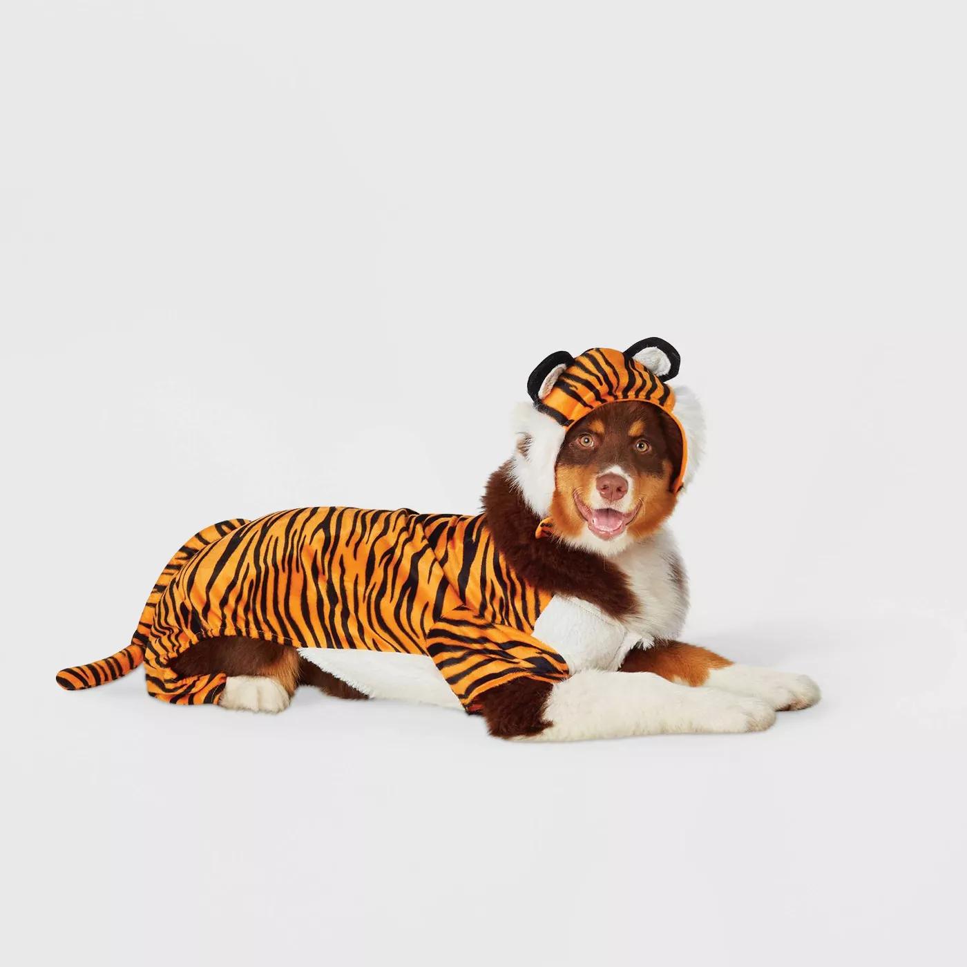 brown dog wearing an orange tiger halloween costume