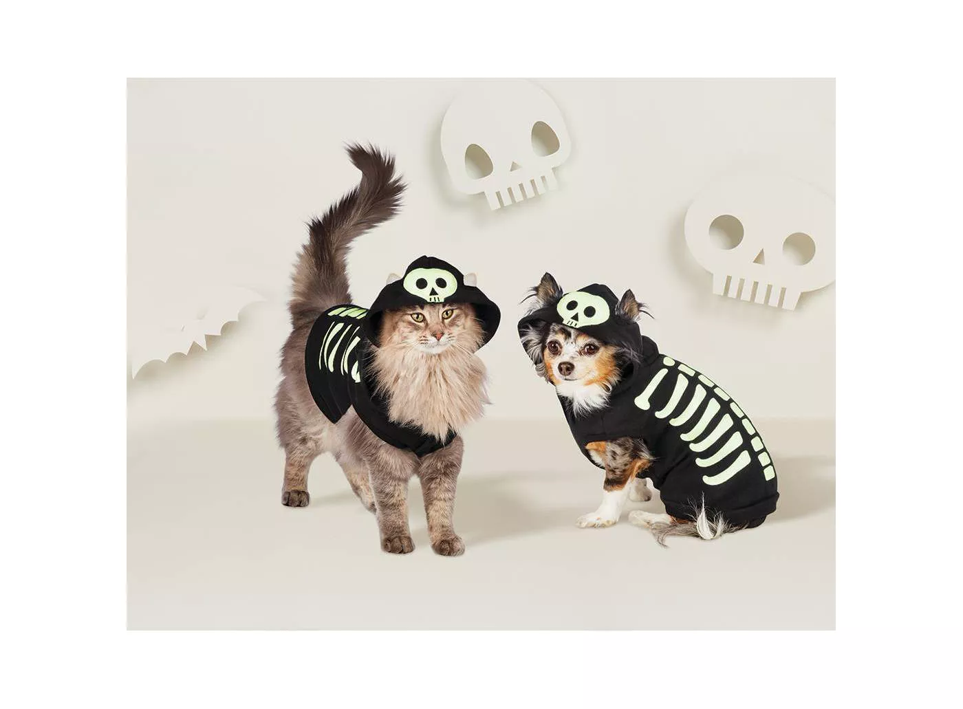 dog and cat wearing skeleton halloween costumes
