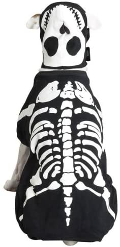 dog wearing a skeleton dog costume