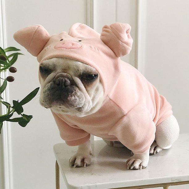 french bulldog wearing a pig dog costume
