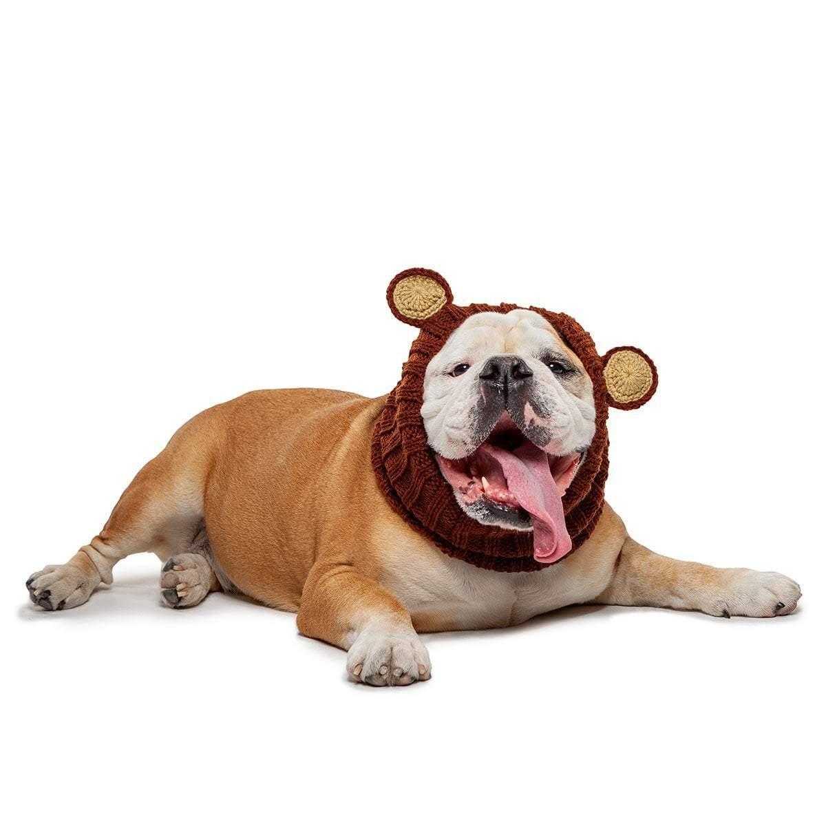 bull dog wearing a snood on his head that looks like teddy bear ears