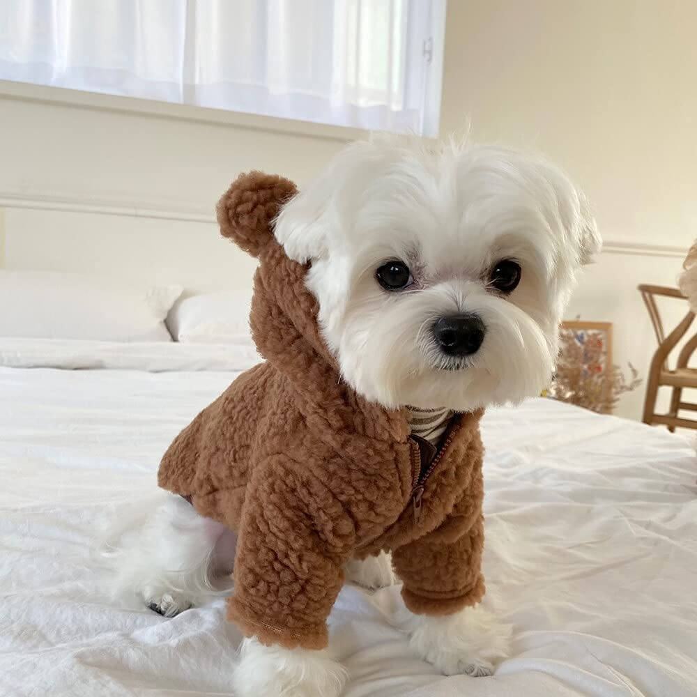 small white dog wearing a brown fleece jacket with teddy bear ears